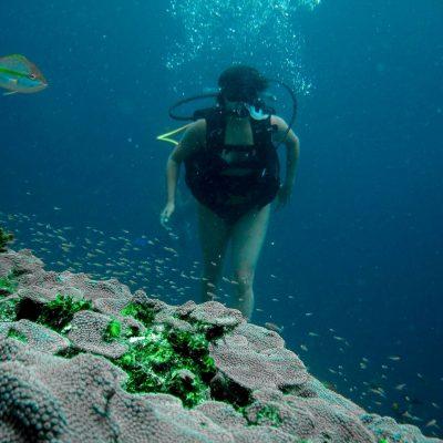 Buceo en el Caribe en las Islas del Rosario, Colombia en 2006
